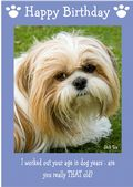 "Shih Tzu-Happy Birthday - ""Are You Really THAT Old"" Theme"
